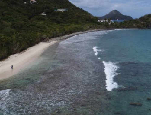 Buscan romper récord Guinness nadando hasta Fajardo  – Para el menor tiempo en nadar entre las Islas Vírgenes Británicas y Puerto Rico